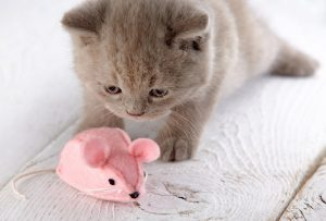 Cat and toy